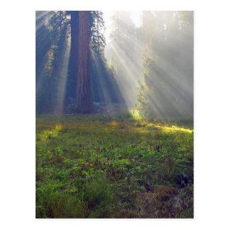 Meadows Foggy Smokey Sunbeams Postcard