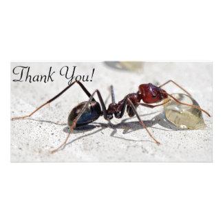 Meat Eater Ant Feeding On Honey Custom Photo Card