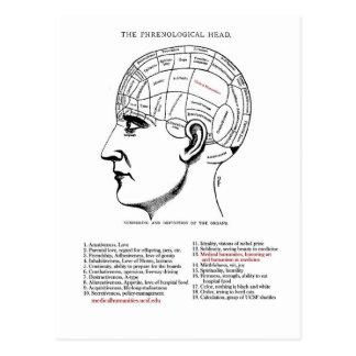 Medical Humanities Phrenology Postcard
