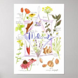 Medicinal Herb Garlic Echinacea Ginger Poster