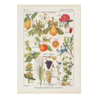 Medicinal Plants Refreshing Print in French