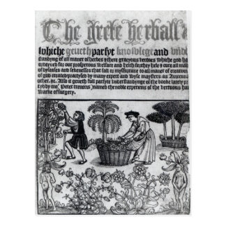 Medieval Herb Garden Postcard