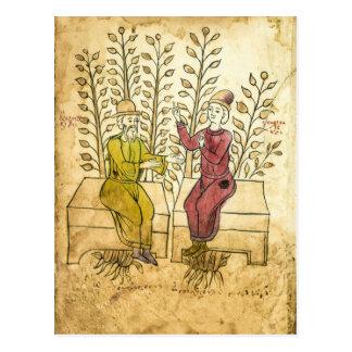 Medieval Herbalist Manuscript real photo postcard