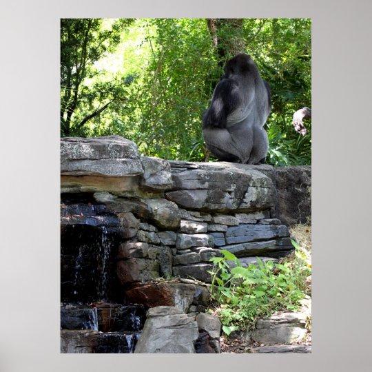 Meditating Silver Back Gorilla Poster