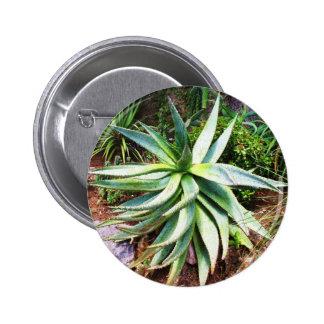 Mediterranean Cactus growing along  Italian coast 2 Inch Round Button