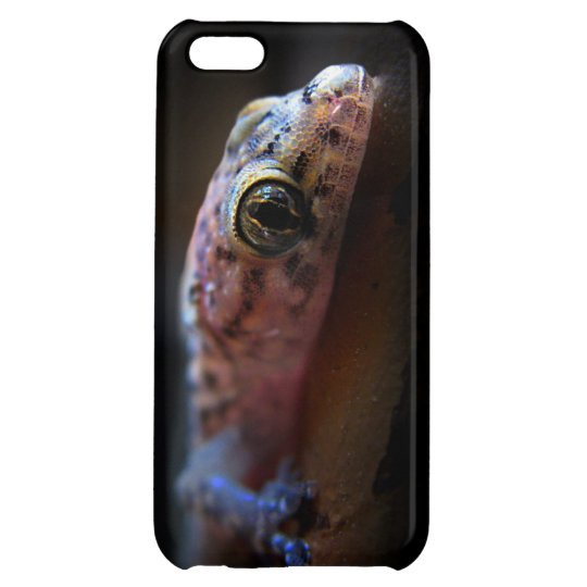 Mediterranean Gecko Lizard iPhone 5C Covers