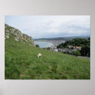 Medium Size Poster Of Llandudno (North Wales)