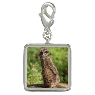 Meerkat_20171001_by_JAMFoto Photo Charm