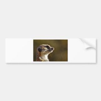 Meerkat Animal Nature Zoo Tiergarten Small Fur Bumper Sticker