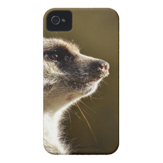 Meerkat Animal Nature Zoo Tiergarten Small Fur iPhone 4 Cover