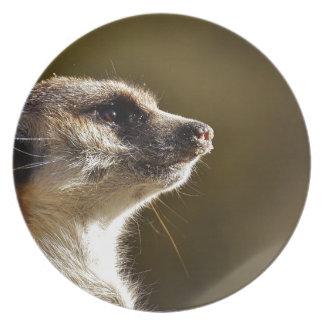 Meerkat Animal Nature Zoo Tiergarten Small Fur Plate