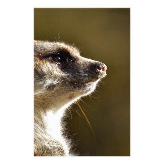 Meerkat Animal Nature Zoo Tiergarten Small Fur Stationery