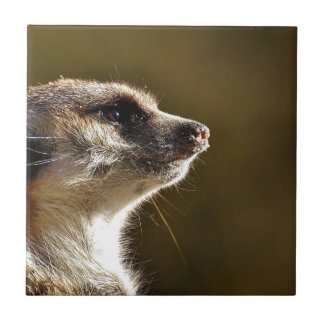 Meerkat Animal Nature Zoo Tiergarten Small Fur Tile