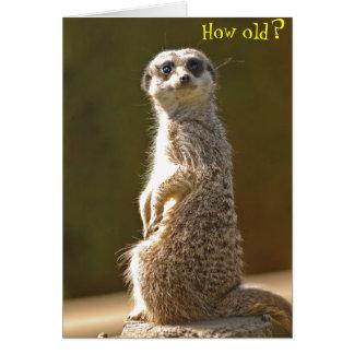 Meerkat Birthday Card -How old?
