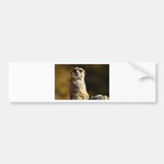 Meerkat Bumper Sticker