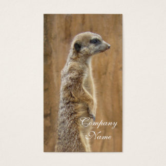 Meerkat business cards