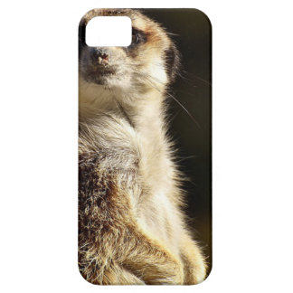 Meerkat Case For The iPhone 5