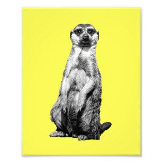 Meerkat Custom Photo Print