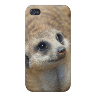 Meerkat Face 4 iPhone 4/4S Cover