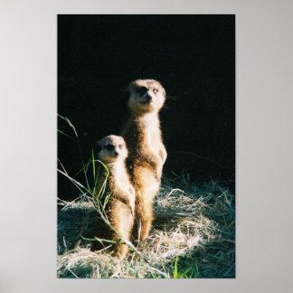 Meerkat Friends Poster
