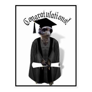 Meerkat Graduate W/Grey Gown & Black Sash Postcard