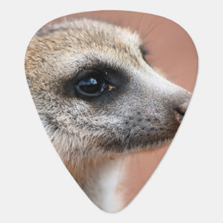Meerkat Guitar Pick