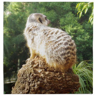 Meerkat_High_Views,_ Napkin