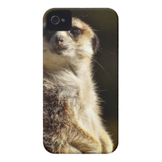 Meerkat iPhone 4 Covers