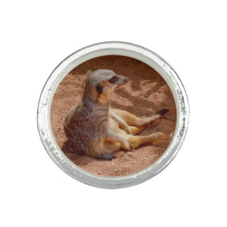 Meerkat Lazy Days, Silver Round Ring. Rings