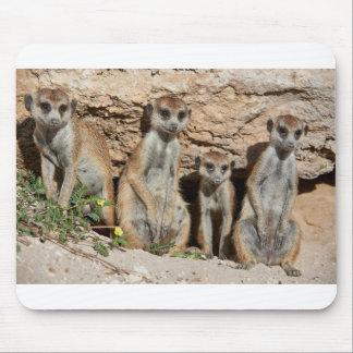 meerkat or suricate, Suricata suricatta Kalahari Mouse Pad