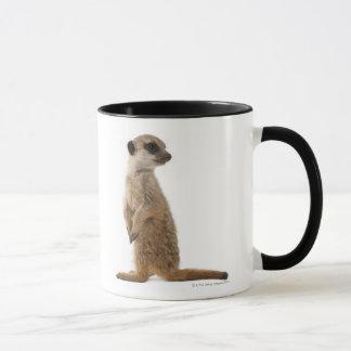 Meerkat or Suricate - Suricata suricatta Mug