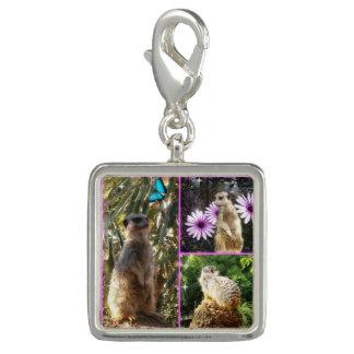 Meerkat Photo Collage, Charm