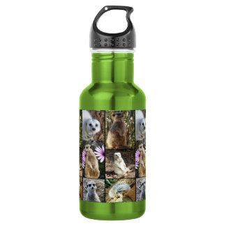 Meerkat Photo Collage, Reusable Water Bottle