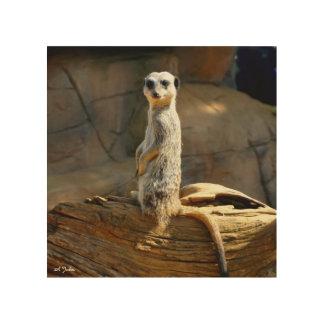 Meerkat photo image on wood wood print
