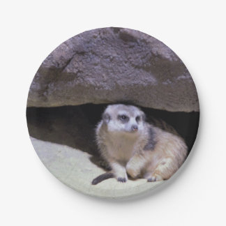 Meerkat Photo Paper Plate