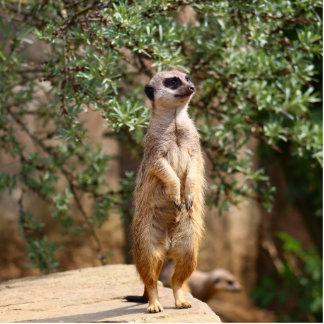 Meerkat Standing Photo Sculpture