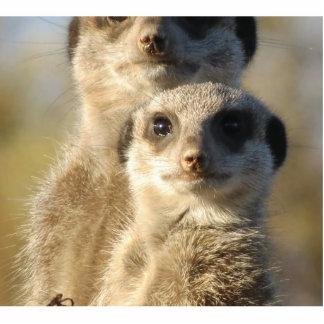 Meerkat Acrylic Cut Out