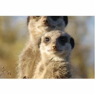 Meerkat Cut Out