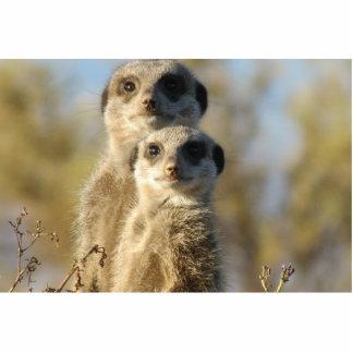 Meerkat Cut Outs