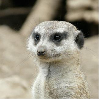 Meerkat Photo Cutouts