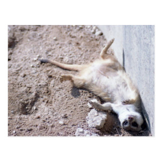 Meerkat Postcard (004)