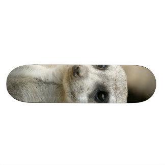 Meerkat Custom Skateboard