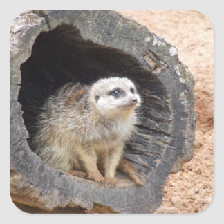 Meerkat sticker - square