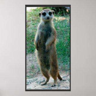 Meerkat Tall Poster