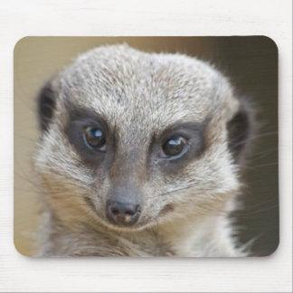 Meerkat Up Close Mouse Pad
