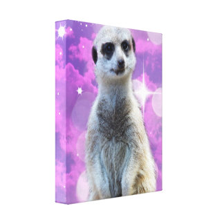 Meerkat With Sparkle, Canvas Print
