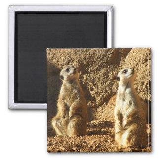 Meerkats Magnet