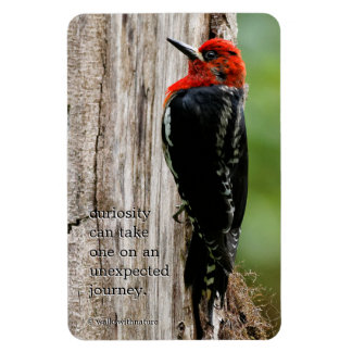Meeting a Red-Breasted Sapsucker Rectangular Photo Magnet