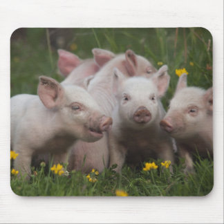 Meeting of the Three Little Pigs Mouse Pad