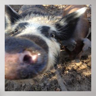 Meg the Pig Poster